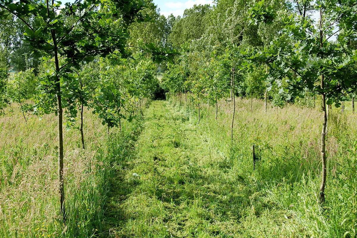 Jong aangeplant bos in Herzele